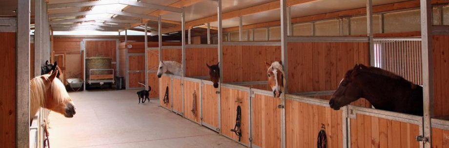 Der moderne Stall auf dem Heiterhof in Tuningen für Pensionspferde - wir haben noch Paddockboxen frei!