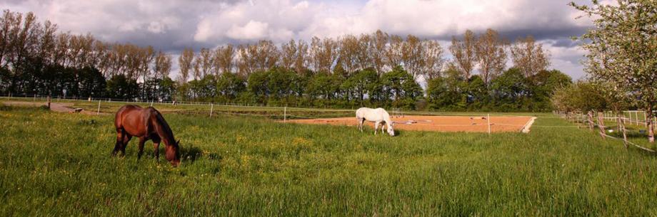 Quarter Horse auf dem Reiterhof in Tuningen