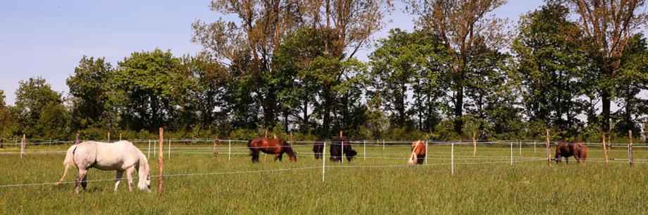 Quarter Horse auf dem Heiterhof in Tuningen